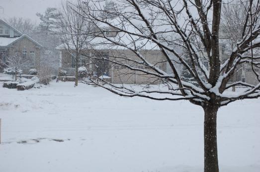 Winter in Newmarket